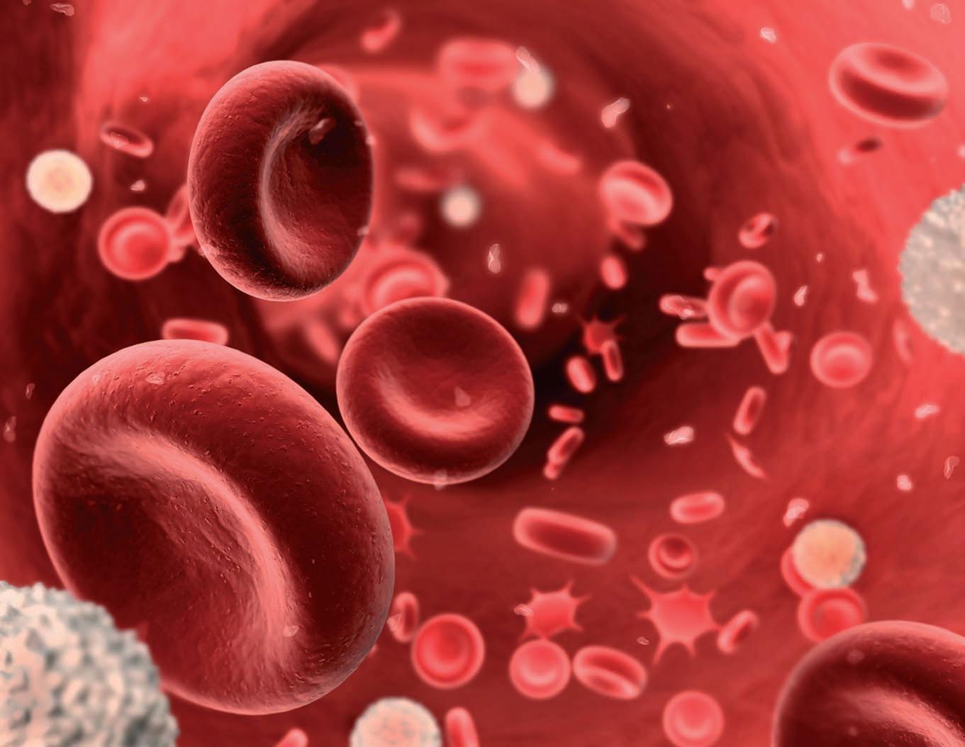 Anemia perniciosa: ¿En qué ayuda la Apiterapia?