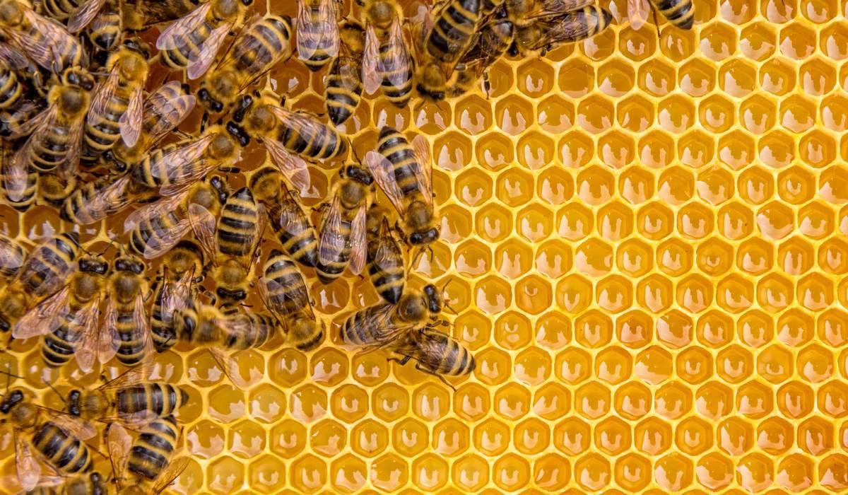 5 ventajas de aplicar el veneno de abejas inyectable